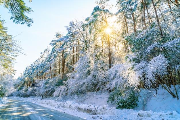겨울에도, 일본