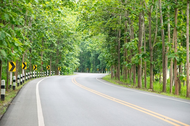 The road is lined with lovely trees and twists.