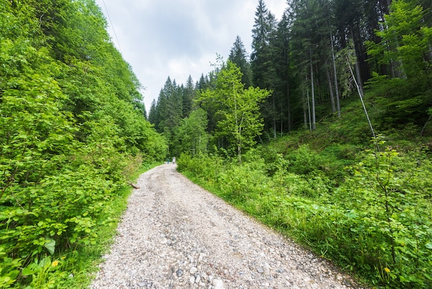 Road leading to a forest in carpathian mountains