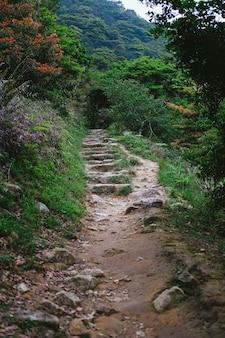 Una strada che porta alle verdi montagne