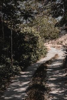 森を越えて町へ続く道。高品質の写真
