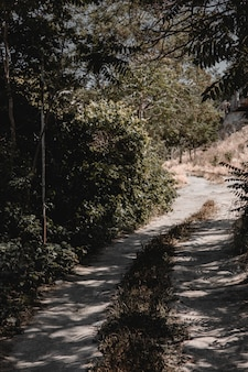 Road leading to the town across forest. high quality photo