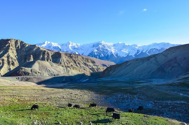 On the road in leh ladakh landscape