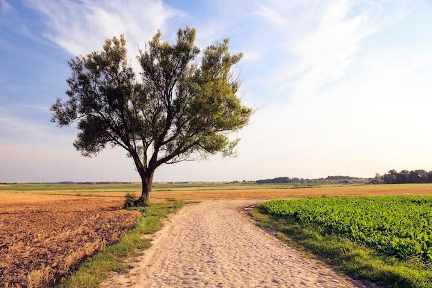 春の田園地帯にある道路