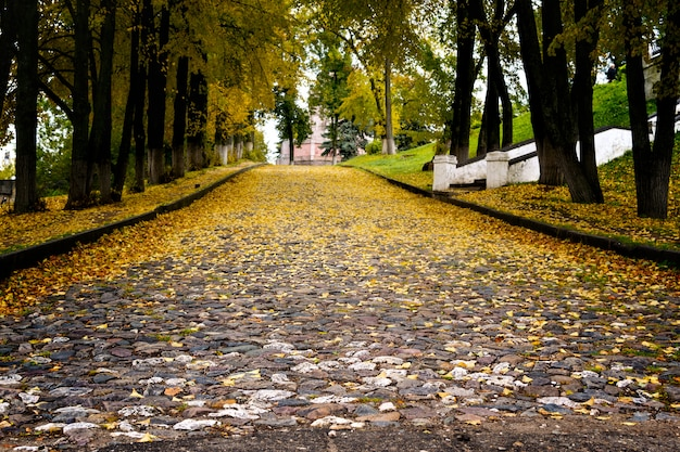 Road made of cobble stones covered with yellow leaves shot from low angle.