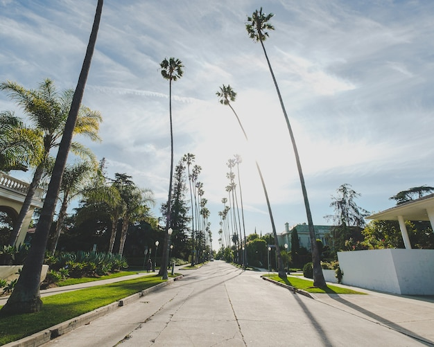 Road in the middle of buildings and palm trees under a blue cloudy sky