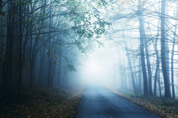 Road and misty forest in autumn.