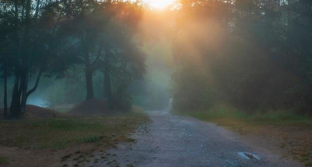 Road in a mystical foggy forest at summer dawn