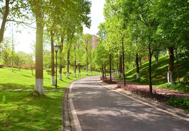 Strada e la natura