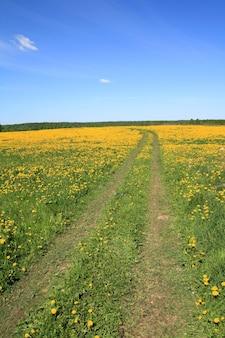 Дорога на поле