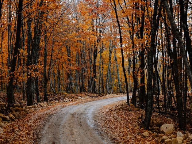 Road path yellow leaves autumn forest nature fresh air tall trees