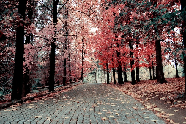 Road paved with paving stones in autumn park, path for walking on the sides where trees with yellow leaves