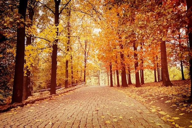 秋の公園の敷石で舗装された道、黄色の葉のある木々が立ち並ぶ側を歩く道