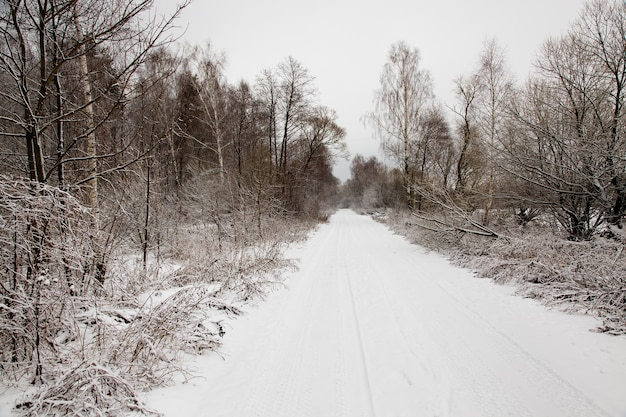 The road photographed in a winter season
