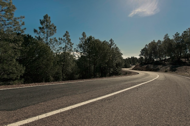 Road between pines tree forest with blue sky