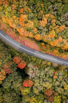 Road between red autumn forest