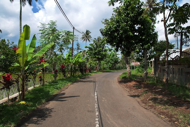 The road on rice fields in village of indonesia