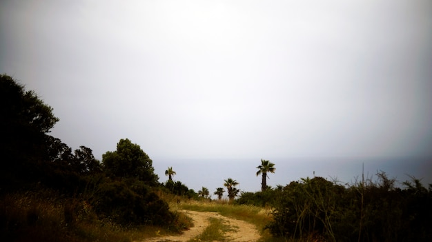 Road to the sea through palm trees