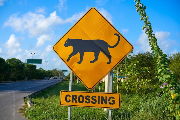 Road sign panther jaguar crossing mexico
