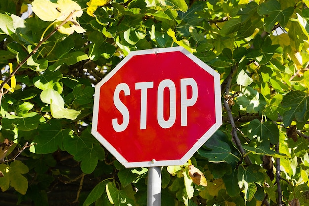 Road sign stop on a green leaves background.