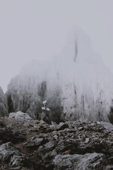 雪に覆われた山の近くの道路標識