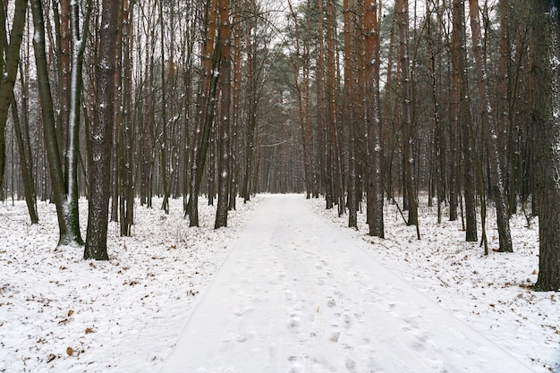 Road in a snowy forest. winter landscape