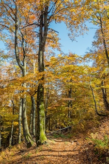 美しい秋の森に葉が散らばる道