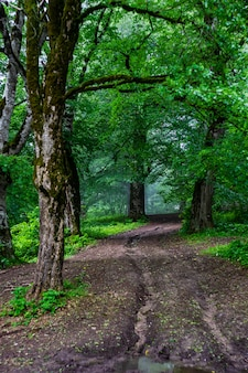 The road in summer forest
