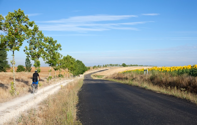 Road and sunflowers field