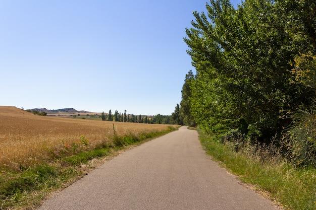 곡식 밭으로 둘러싸인 도로.