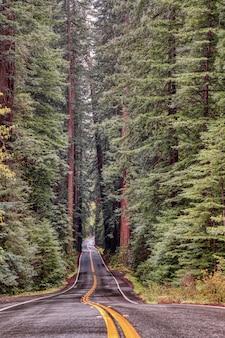 カリフォルニアの巨人の大通りの背の高い木々に囲まれた道路