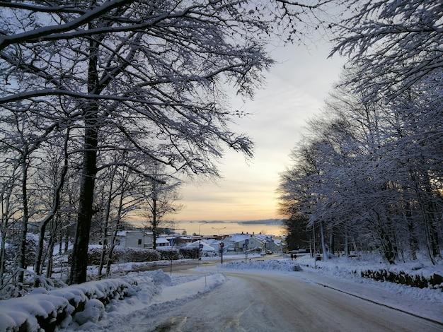 Дорога в окружении деревьев и зданий, покрытых снегом во время заката в ларвике в норвегии