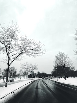 Road surrounded by trees and cars covered in the snow with buildings