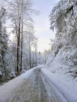 Strada circondata da alberi coperti di neve sotto la luce del sole a larvik in norvegia