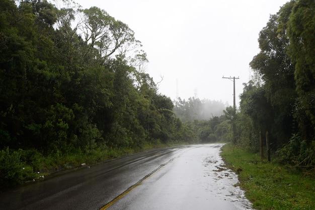안개가 자욱한 날에 중앙 스트립을 보여주는 나무로 둘러싸인 도로