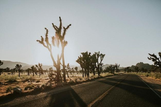 カリフォルニアの砂漠を抜ける道