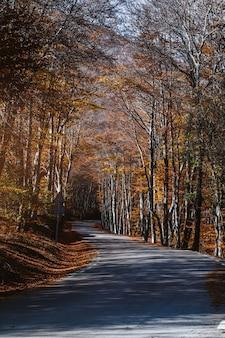 Дорога через осенний лес на закате