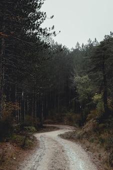 雨の日の暗い森の道
