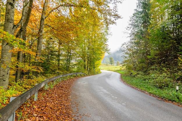 妖精秋の森、明るいブナの木、風景の中の道