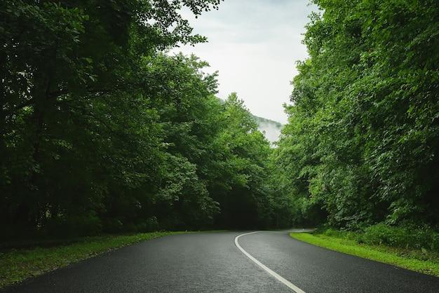 森の中の道雨霧