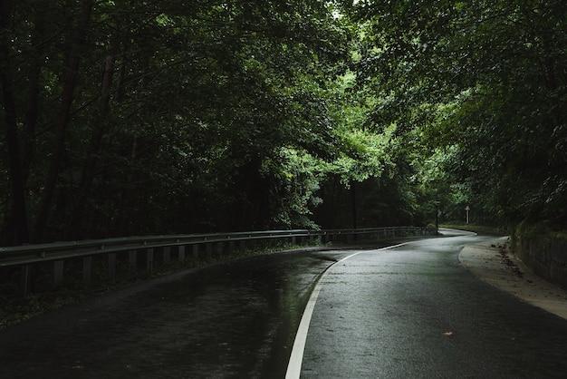 森の中の道雨のどんよりした