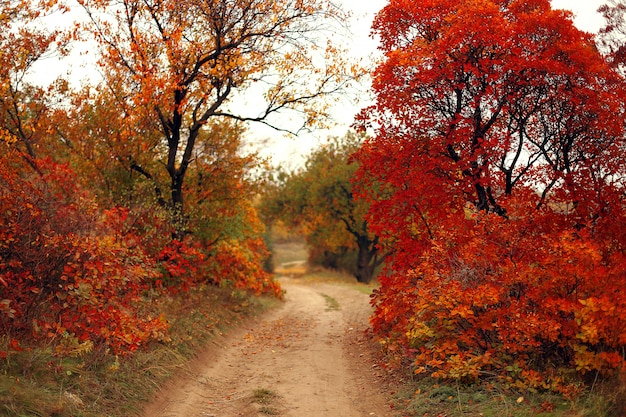 Road through the forest with trees and bushes with red autumn leaves.