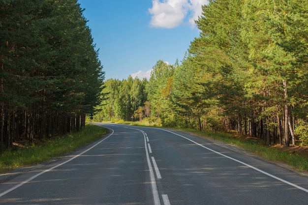 Дорога через зеленый густой лес в россии. вокруг зеленых сосен и голубого неба, солнечный день и осенние времена