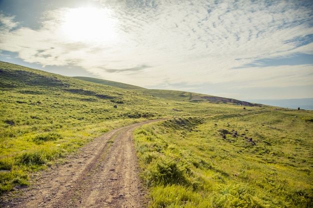 緑の野原を通る道路