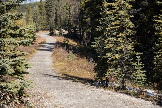 Strada attraverso la foresta verde