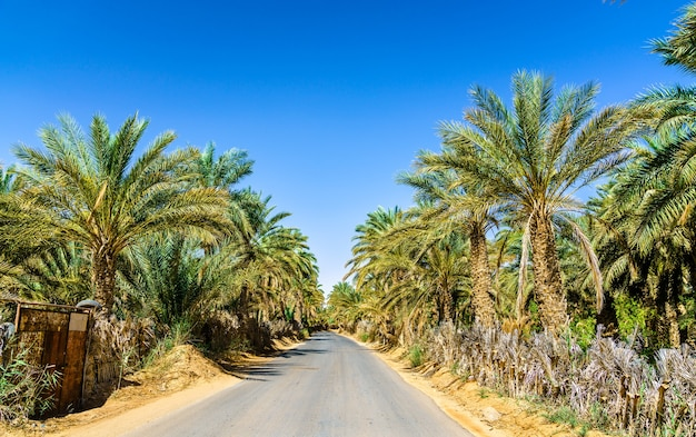 Road through an oasis in tamacine - algeria, north africa