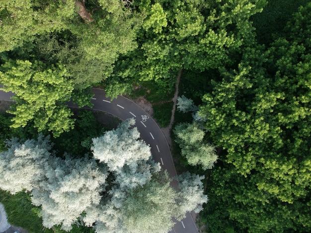 Дорога через зеленый лес, вид с воздуха
