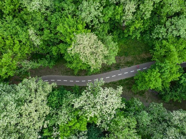 Дорога через летний зеленый лес, вид с воздуха