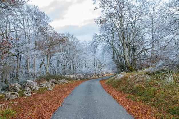 흰 서리가 내린 나무가있는 숲 라인을 통과하는 도로