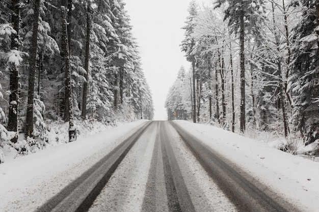 Road through winter forest